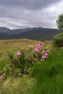 Flowers of Connemara